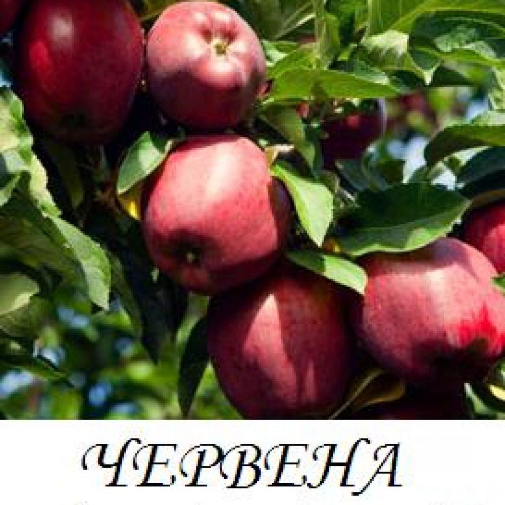 chervena_prevyzhodna