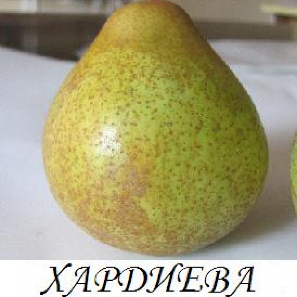 hardieva_maslovka