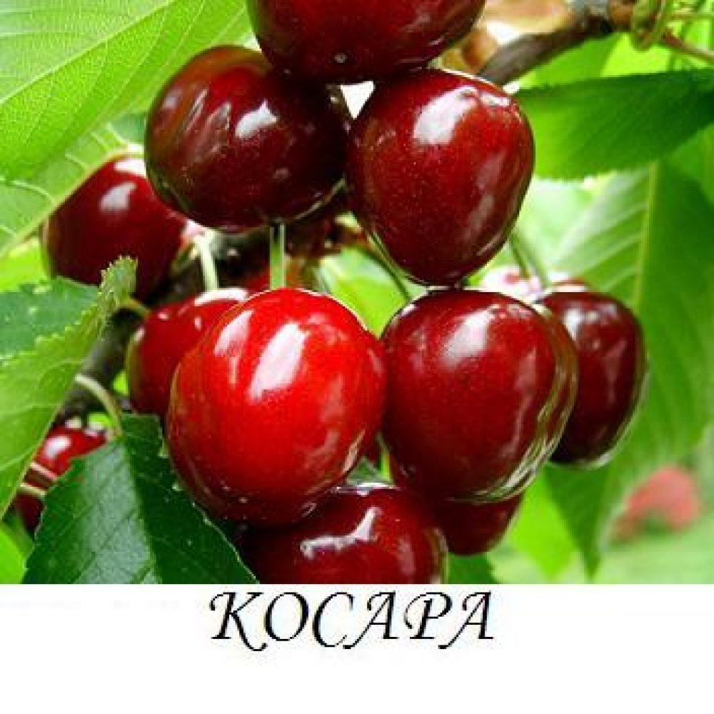 kosara