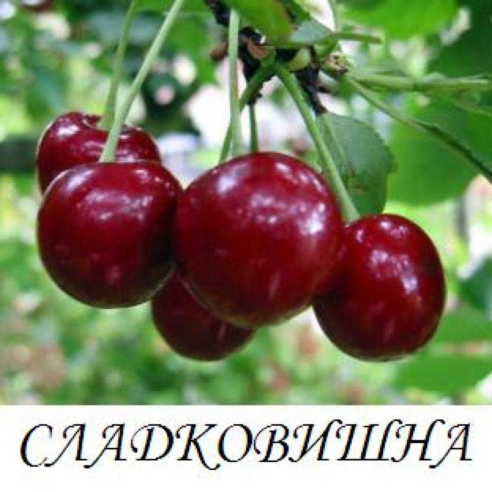 sladkovishna