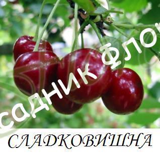 череша Сладковишна