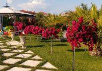 градина от щамбови рози