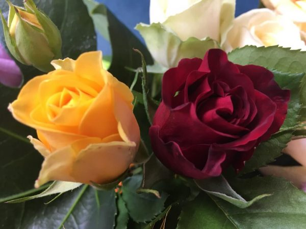 Т20 комбинирана щамбова роза