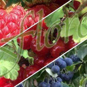 Плодни храсти